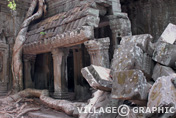 Photos Cambodge - Angkor - Ta Prohm -