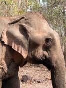 Photos du Laos - Balade à dos d'éléphant