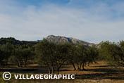 Photos Provence - Champ d'oliviers dans le massif des Alpilles