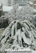 Photos Provence - Palmier sous la neige à Marseille en 2009