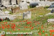 Photos Rome - Le mont Palatin (Palatino)