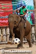 Photos Thailande - Un cornac et son éléphant jouant au foot!!