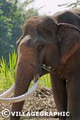 Photos Thailande - Eléphant au village Ban Tha Klang