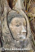 Photos Thailande - Wat Phra Mahathat - célèbre tête de bouddha